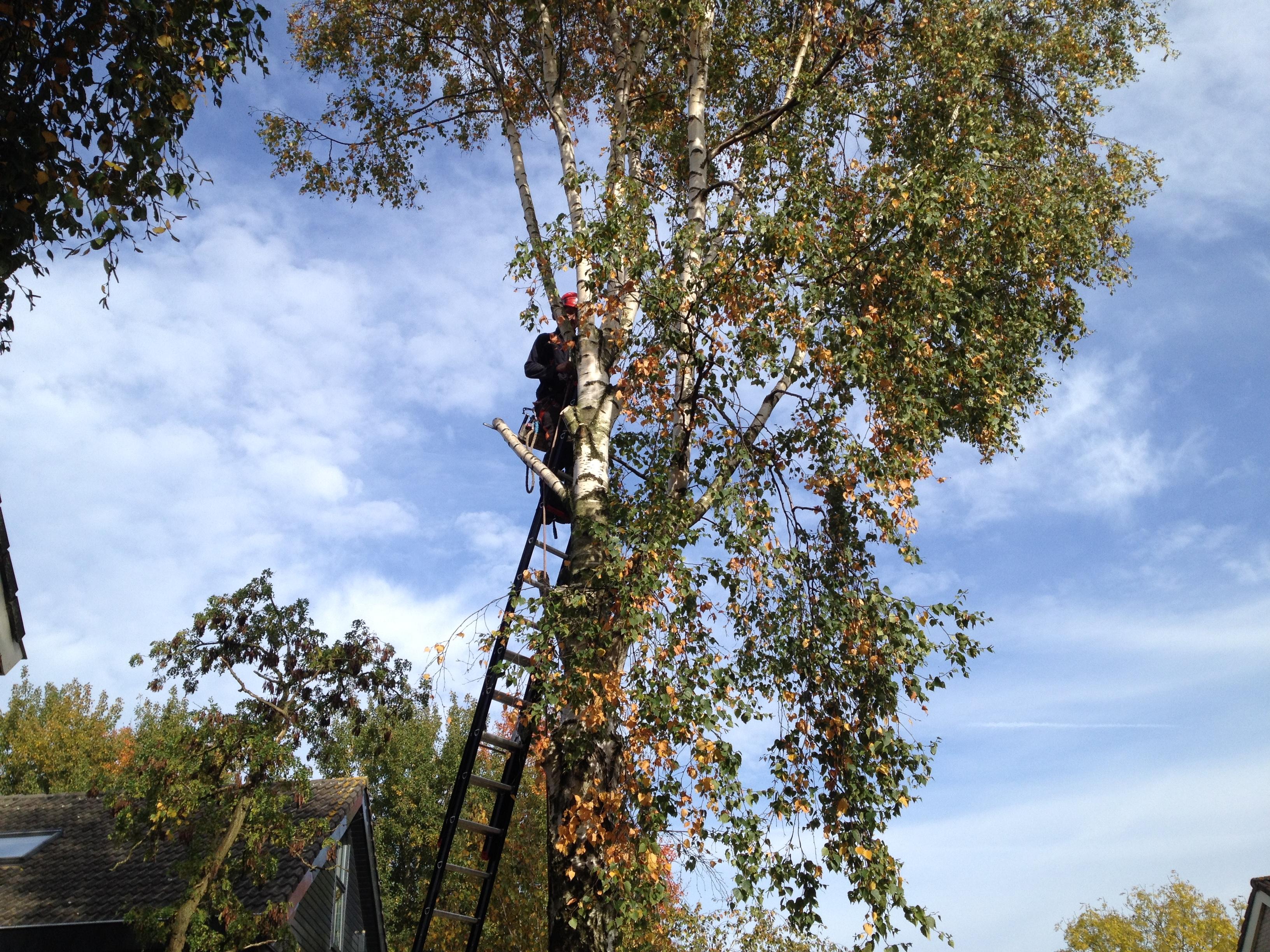 Bomen laten kappen tuinaanleg concurrent for Prijzen tuinonderhoud